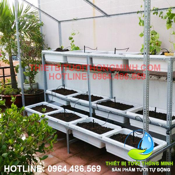 lắp đặt hệ thống tưới vườn rau trên sân thượng