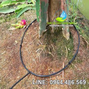 Vòng dây tưới nhỏ giọt 6ly quấn quanh gốc Florain